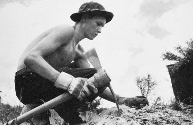 A CCC worker planting trees. In March 1933, President Franklin D. Roosevelt p...