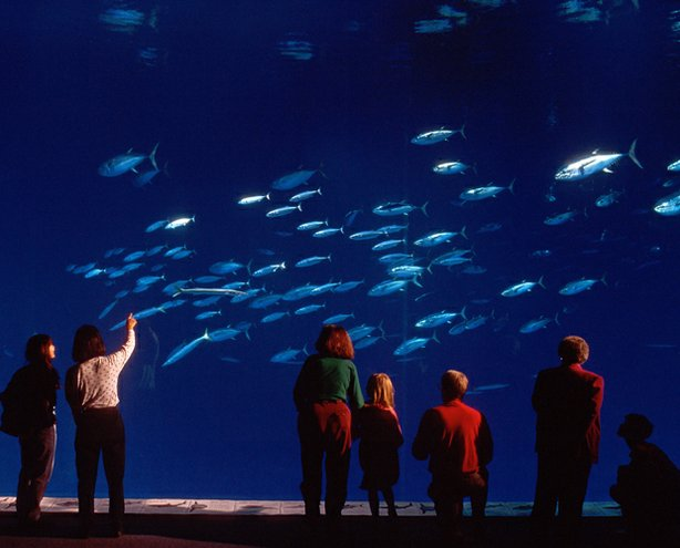 Visitors to the Monterey Bay Aquarium enjoy the million-gallon Outer Bay exhi...