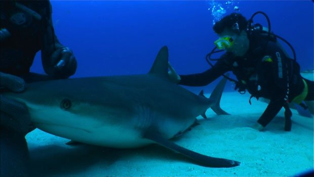 Host David Pogue swims with sharks to get a close look at their skin. Sharksk...