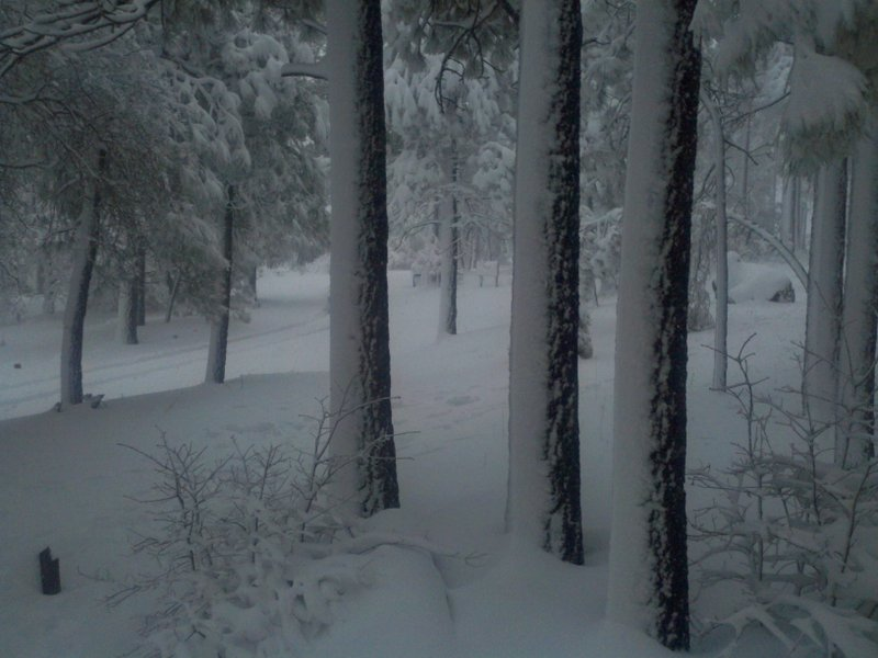 A view of snow blanketing the trees and hillside at the 6,000 foot elevation ...