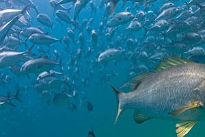 Mexican Marine Reserve Is 'World's Most Robust'