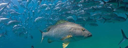 "Hidden Baja Undersea Park is the ""world's most robust marine reserve,"" accord..."