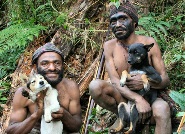 Hunting dogs in Papua, New Guinea.
