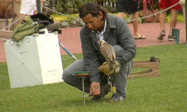 Jorge Herrera with one of his falcons at the Hotel Del Coronado.
