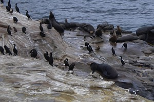 San Diego Sued Over 'Foul Odor' of Sea Lion And Bird Poop...