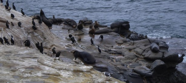 Seals, sea lions and sea birds inhabit the rocks along the sandstone cliffs a...