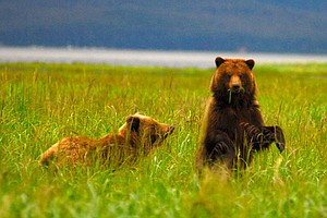 Photo for NATURE: Fortress Of The Bears