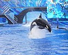 42-Year-Old SeaWorld Orca Dies