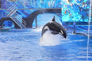 Photo for 42-Year-Old SeaWorld Orca Dies