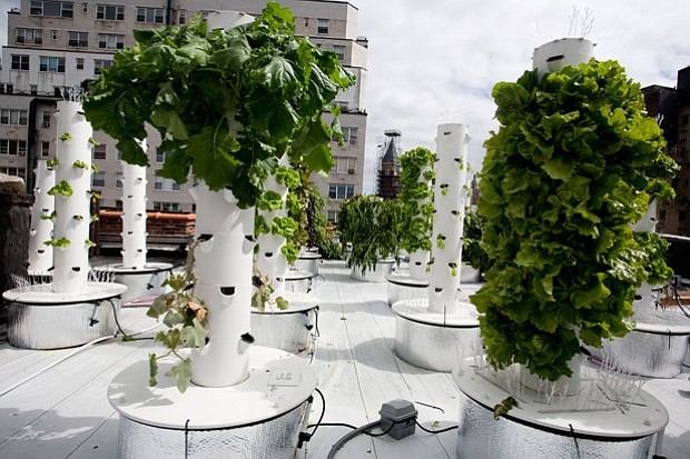 A hydroponic rooftop tower farm uses a perfect nutrient blend mixed with wate...