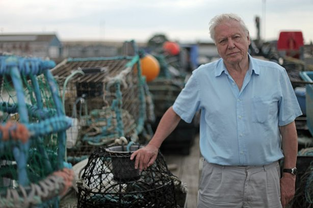 "Sir David Attenborough, host of ""The Death Of The Oceans?"""
