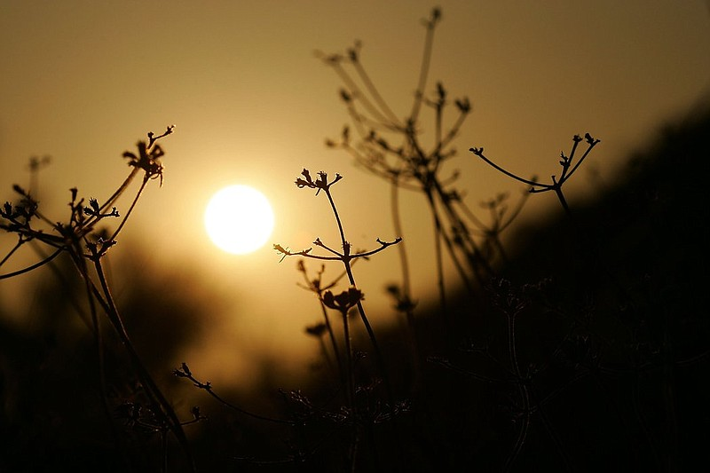 The sun sets behind dry native vegetation.