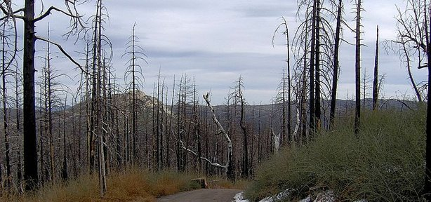 Trees that were burned in the 2003 Cedar Fire blanket the lower slopes of Cuyamaca.