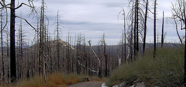 Trees that were burned in the 2003 Cedar Fire blanket the lower slopes of Cuy...
