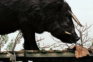 Interview: 'Beasts of the Southern Wild'
