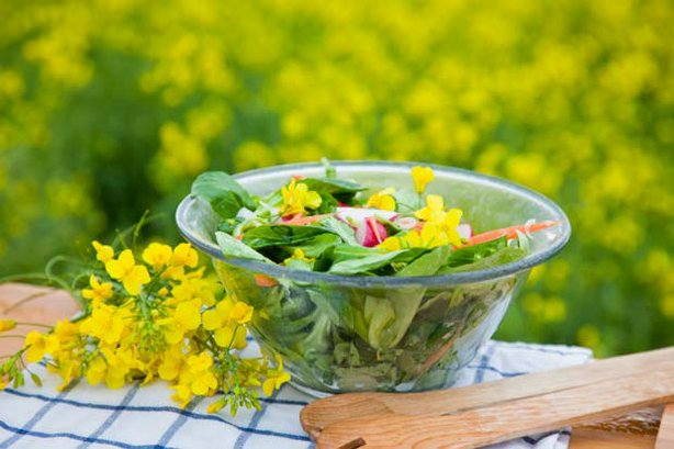 A colorful green salad with vegetables and flowers. In this episode of NEW SC...