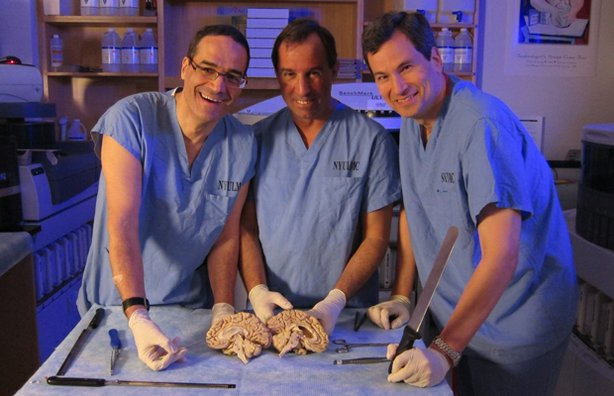 (L to R) David Zagzag, John Golfinos, and David Pogue examine the anatomy of ...