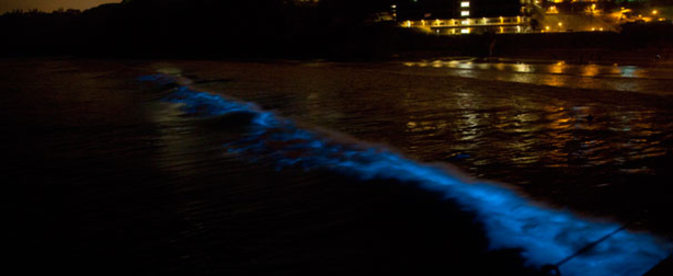 Bioluminescent dinoflagellates turn a wave blue off the Scripps Pier in La Jo...
