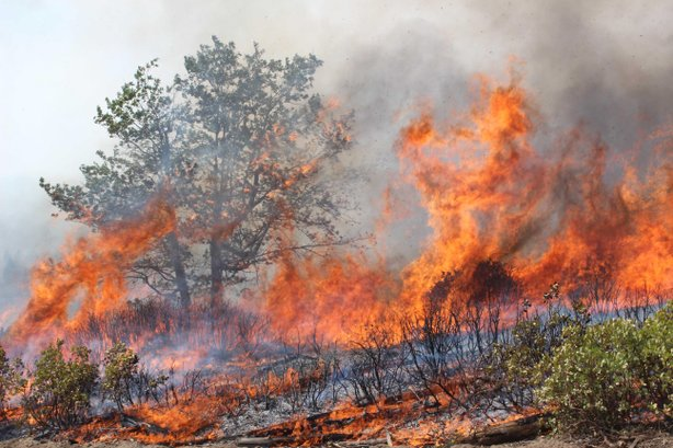 Flames from the Rim Fire sweep up along the South Flank, Aug. 30, 2013.