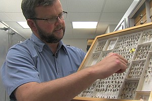 Entomologist Gives Behind-The-Scenes Tour Of The Insect World