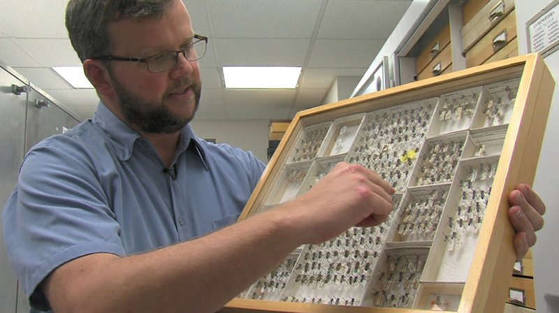 TheNAT's entomologist Dr. Michael Wall displays some of the wonders of the bu...