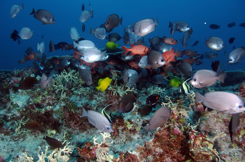 Ocean acidification causes ecosystems and marine biodiversity to change. It h...