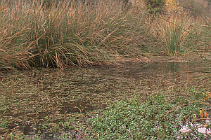 Dry Year Takes Toll On San Diego River