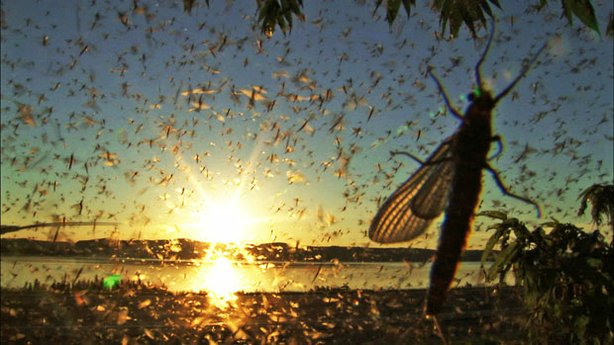 Swarm of mayflies over camera lens.