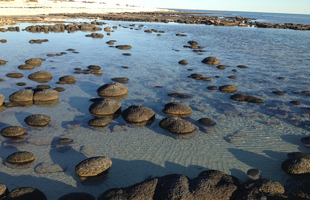 Living stromatolites at Shark Bay, Australia.