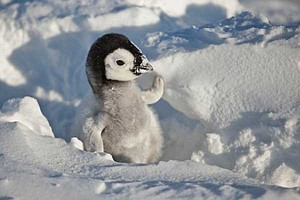 Photo for NATURE: Snow Chick