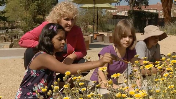 Host Nan Sterman counts pollinators with a young group of Citizen Scientists ...