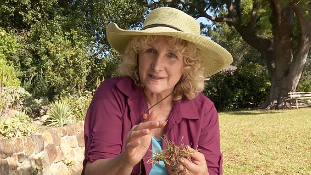 Host Nan Sterman visits several home gardens, each of which uses a different ...