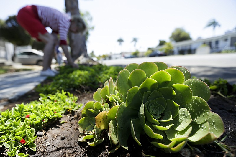 A woman works among drought-tolerant plants in her front yard in San Diego, J...