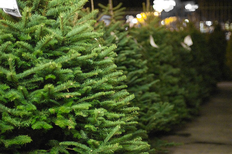 Last Chance For San Diego Residents To Recycle Christmas Trees | KPBS