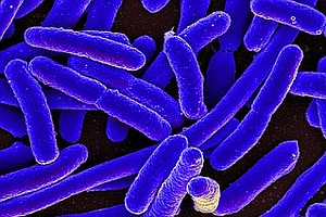 How Tiny Microbes In Your Gut Affect Your Mood