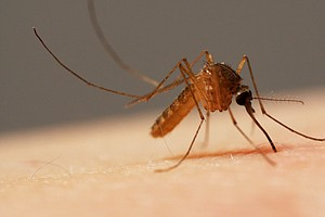 County's First Case Of Travel-Related West Nile Virus Confirmed In Alpine Man