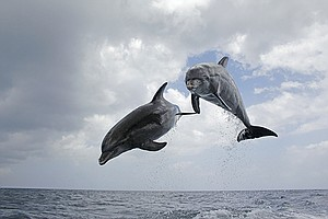 Photo for NATURE: Dolphins: Spy In The Pod