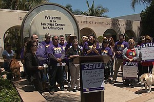 San Diego Animal Shelter Workers Rally Against Potential Outsourcing Of Their...