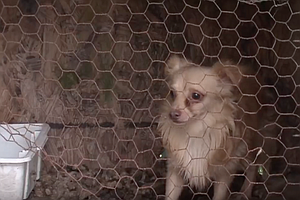 Puppy Mill Ban Passes The California Assembly