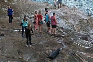 La Jolla Cove Named Fifth Most Bacteria-Ridden Beach In S...