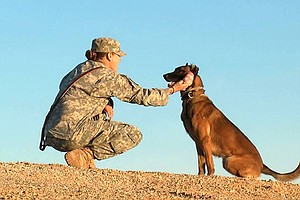 Canine Soldiers: The Militarization Of Love