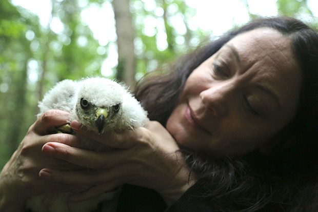 Helen Macdonald holding a young goshawk chick that has just been ringed.