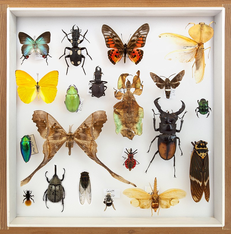 Insects on display in the San Diego Natural History Museum's