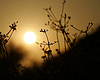 Unusually Dry Conditions Continue In San Diego County