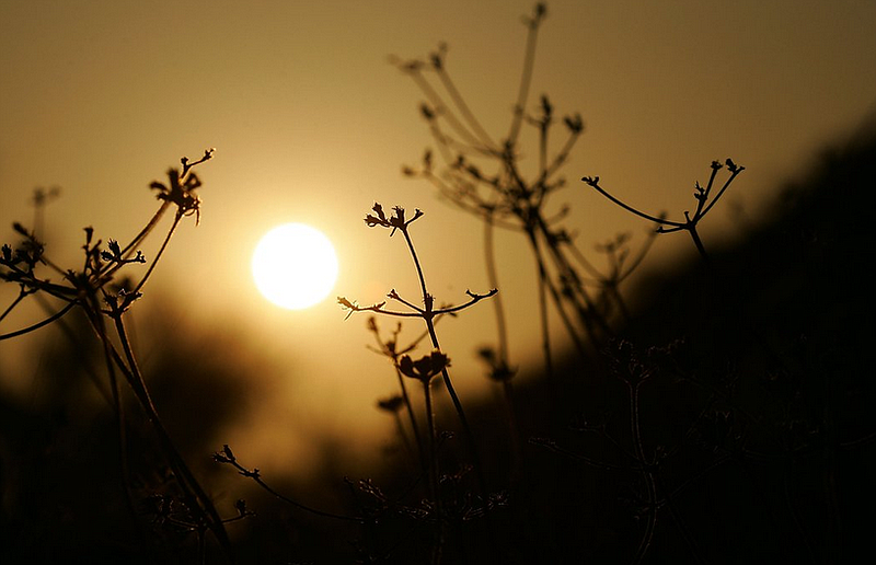 The sun sets behind dry vegetation on a hillside in Southern California.