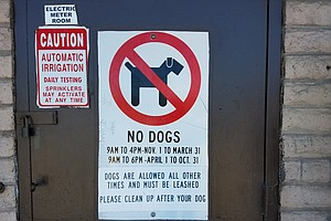 The Most Common Places Dog Owners Are Ticketed In San Diego