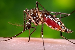 Photo for County To Conduct Two Mosquito Larvicide Drops This Week