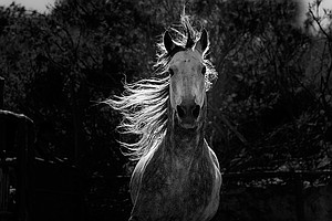 NATURE: Equus: Story Of The Horse