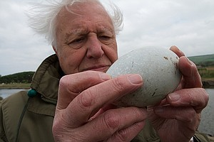 Photo for NATURE: The Egg: Life's Perfect Invention