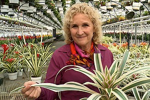 A GROWING PASSION: The Beautiful Bromeliad